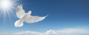 4621948 - white dove flying on clear blue sky