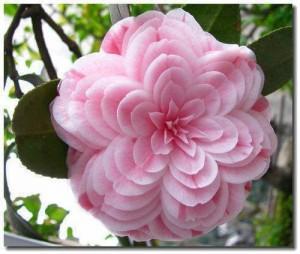 fleur-rare-09