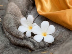 15360220 - plumeria flower on ancient hand of buddha statue